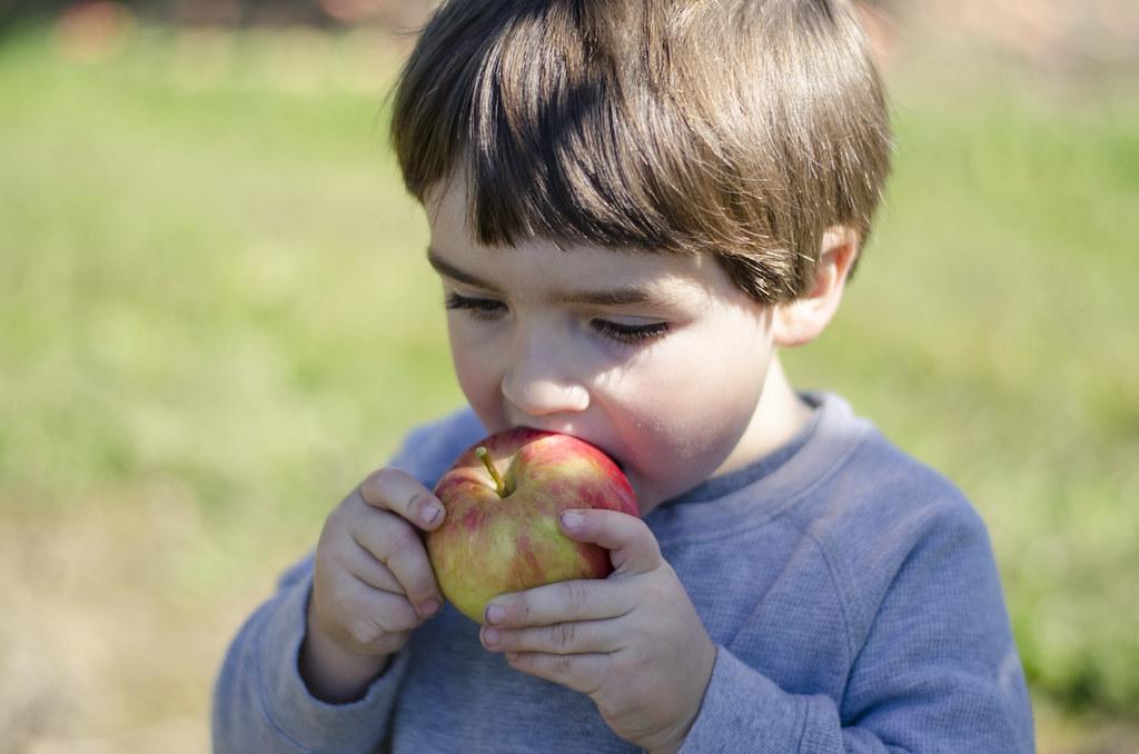 short story // apple picking 7