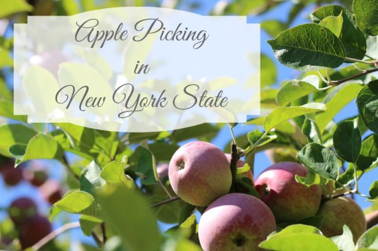 Apple Picking in NYS