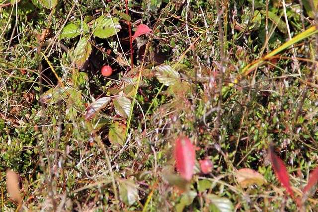 20141004_Cranberry_Glades_009