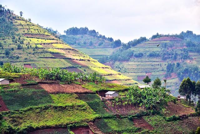 After the Rainforest, Uganda