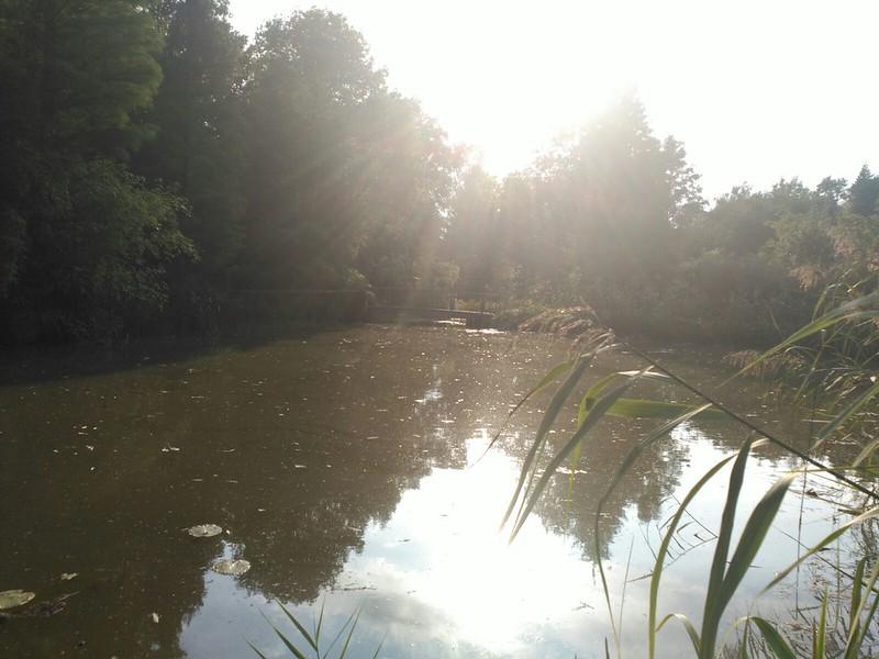 IMG-20160925-WA0080 Parque Bokrijk, naturaleza en esencia - 33020351651 2549d17db5 c - Parque Bokrijk, naturaleza en esencia