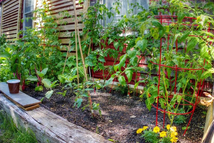 Vegetable garden, The Canteen.