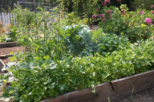 herbs and kale