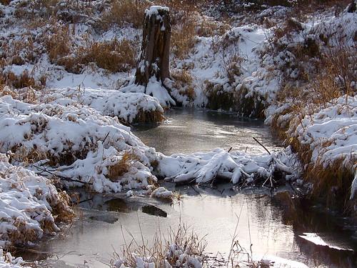 Beaver dam December 13