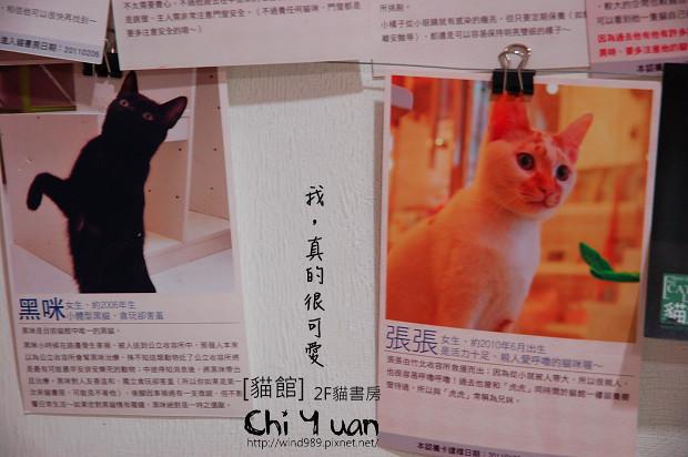 貓書房14.jpg