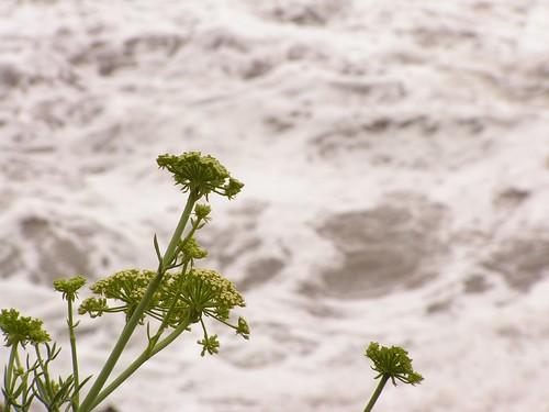 Mudos testigos de las olas