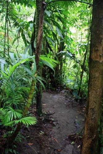 Costa Rica - Día 5 (386)