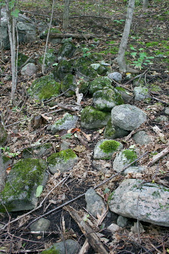 Rocks for International Rock-flipping Day