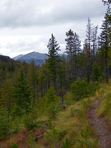 USFS trail 404