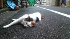 Akihabara,Tokyo