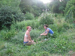 Midsummer Herb Harvest