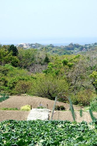 Hayama View