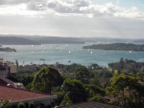 sailboats in Sydney Harbour