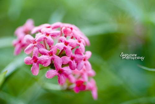 Flower @ Hort Park