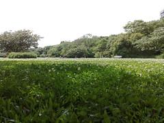 Domingo no Parque