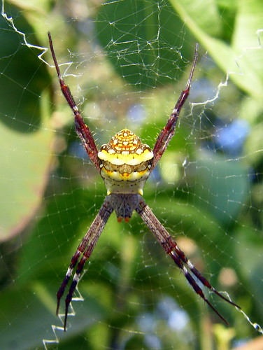writing spider pictures