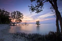 Dawn in the mini mangrove forest