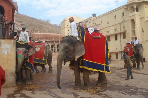 Amber Fort 1-7 騎大象琥珀堡