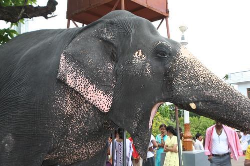 karnataka.m08 178