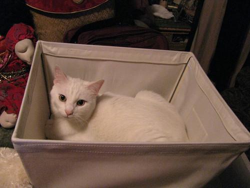 Obligatory Cat in a Box
