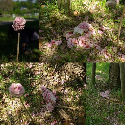 森のお花屋さん_2