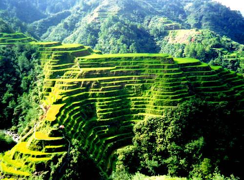Mountain of Rice thai rice