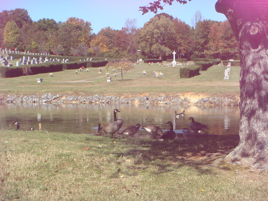 Graveyard Geese
