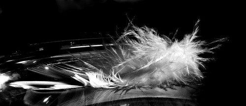 Floating Feather 4