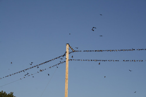 Purple Martins - On the Wire