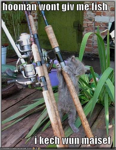 fishing kitteh