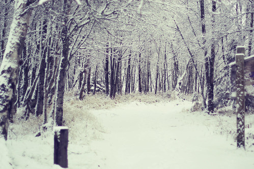 The Road Less Traveled--winter version