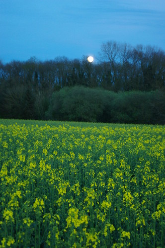 20100427-17_Moon-rise over Cawston Woods + Oil seed rape field by gary.hadden
