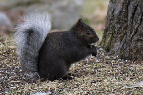 Funny Looking Squirrel