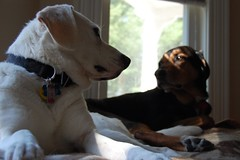 Dogs Telepathy communicate talk no-words