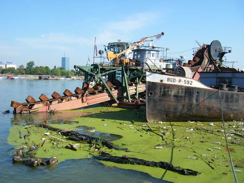 Refuse and Algae on the River Sava