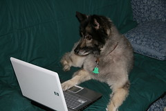 Dog at computer, dog keyboard, dog computer, dog couch, dog playing,