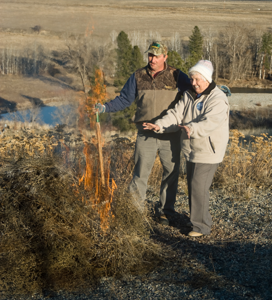 Burning the knapweed