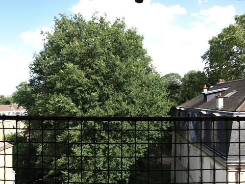 Jardin des Plantes treetop view