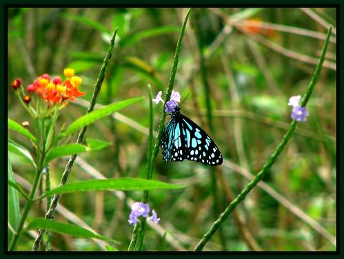 Nectar Paradise