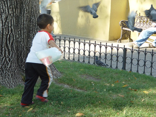 He came close a few times to actually swatting the pigeons.