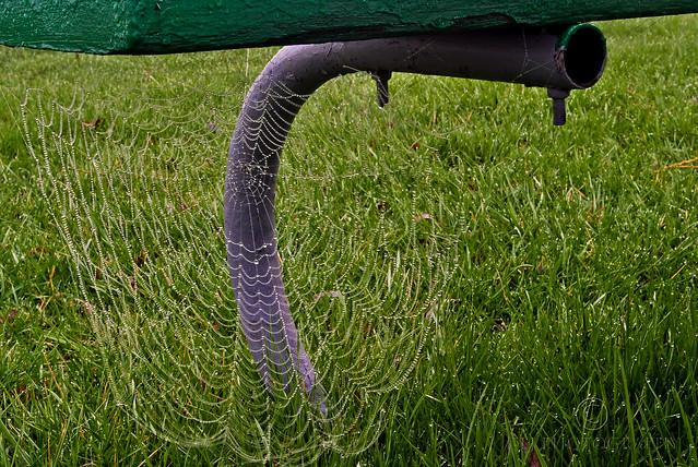 Stewart Park spider web