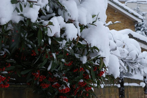 Snow_2009-3