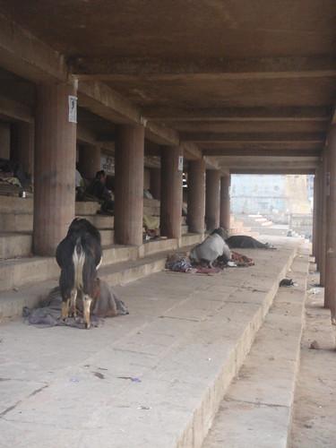 Ganges River1-29恆河台階下的人與動物