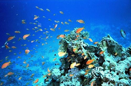 Vita Marina Hurghada