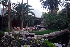 Vegas - Flamingo