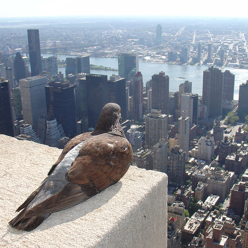 Empire State Pigeon by ZeroOne