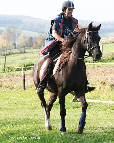 Katatjutas Greyhounds Pferde & Joey