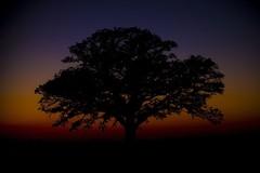 The Tree 49