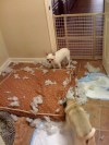 Destructo Dog!!