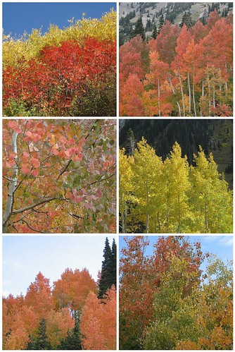 Fall Foliage - Alta, Utah